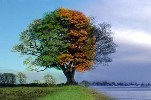 Four Seasons, One Tree